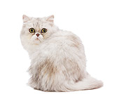 CAT 03 JE0215 01
