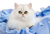 CAT 03 JE0218 01