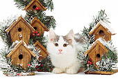 CAT 03 JE0221 01