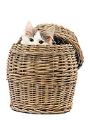 CAT 03 JE0222 01