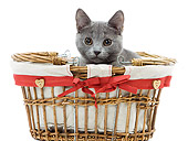 CAT 03 JE0224 01