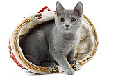 CAT 03 JE0225 01