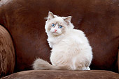 CAT 03 JE0230 01