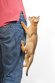 CAT 03 JE0238 01