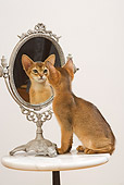 CAT 03 JE0242 01