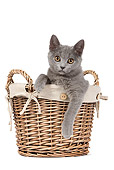 CAT 03 JE0247 01
