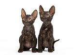 CAT 03 JE0249 01