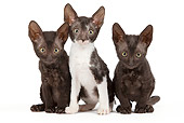 CAT 03 JE0251 01
