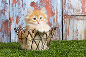 CAT 03 JE0254 01