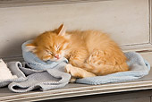CAT 03 JE0257 01