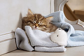 CAT 03 JE0258 01