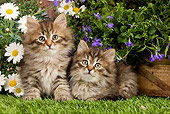 CAT 03 JE0263 01