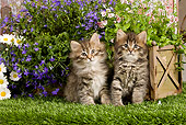 CAT 03 JE0264 01