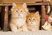 CAT 03 JE0265 01