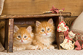 CAT 03 JE0266 01