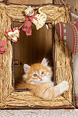 CAT 03 JE0267 01