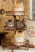 CAT 03 JE0268 01