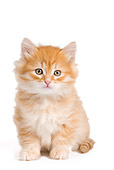 CAT 03 JE0270 01
