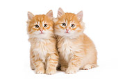 CAT 03 JE0271 01
