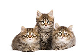 CAT 03 JE0276 01