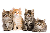CAT 03 JE0278 01