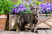 CAT 03 JE0279 01