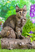 CAT 03 JE0282 01