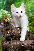 CAT 03 JE0283 01