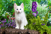 CAT 03 JE0284 01