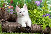 CAT 03 JE0285 01