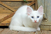 CAT 03 JE0286 01