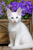 CAT 03 JE0287 01