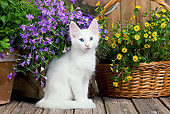 CAT 03 JE0289 01