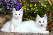 CAT 03 JE0292 01