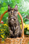 CAT 03 JE0293 01