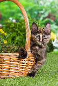 CAT 03 JE0294 01