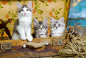 CAT 03 JE0300 01