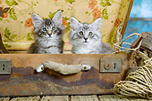 CAT 03 JE0301 01