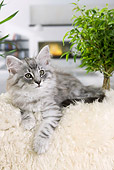 CAT 03 JE0307 01