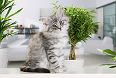CAT 03 JE0308 01