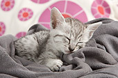 CAT 03 JE0316 01