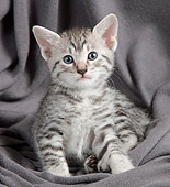 CAT 03 JE0317 01
