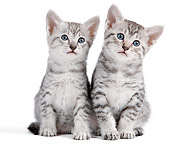 CAT 03 JE0319 01