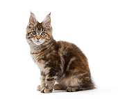 CAT 03 JE0330 01
