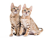 CAT 03 JE0335 01