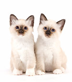 CAT 03 JE0349 01