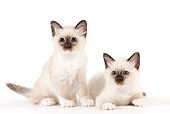 CAT 03 JE0350 01