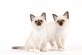 CAT 03 JE0351 01
