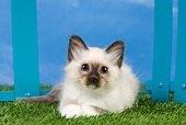 CAT 03 JE0352 01