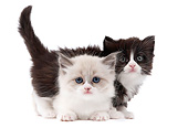 CAT 03 JE0354 01